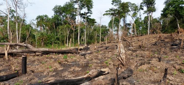 Thermal characterization of Uganda's Acacia hockii