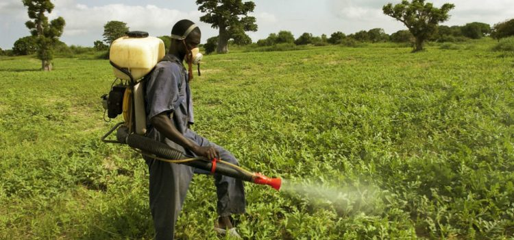 Exposure to multiple pesticides and neurobehavioral outcomes among smallholder farmers in Uganda